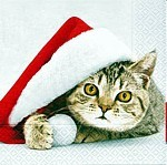 table napkins, Santa cat