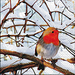 table napkins, Robin in a winter tree